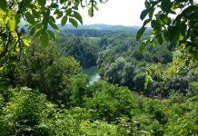 slovenia verde natura viaggiare auto