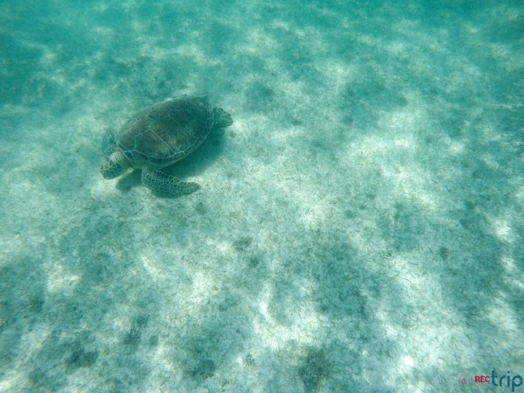 tartaruga akumal viaggio in messico