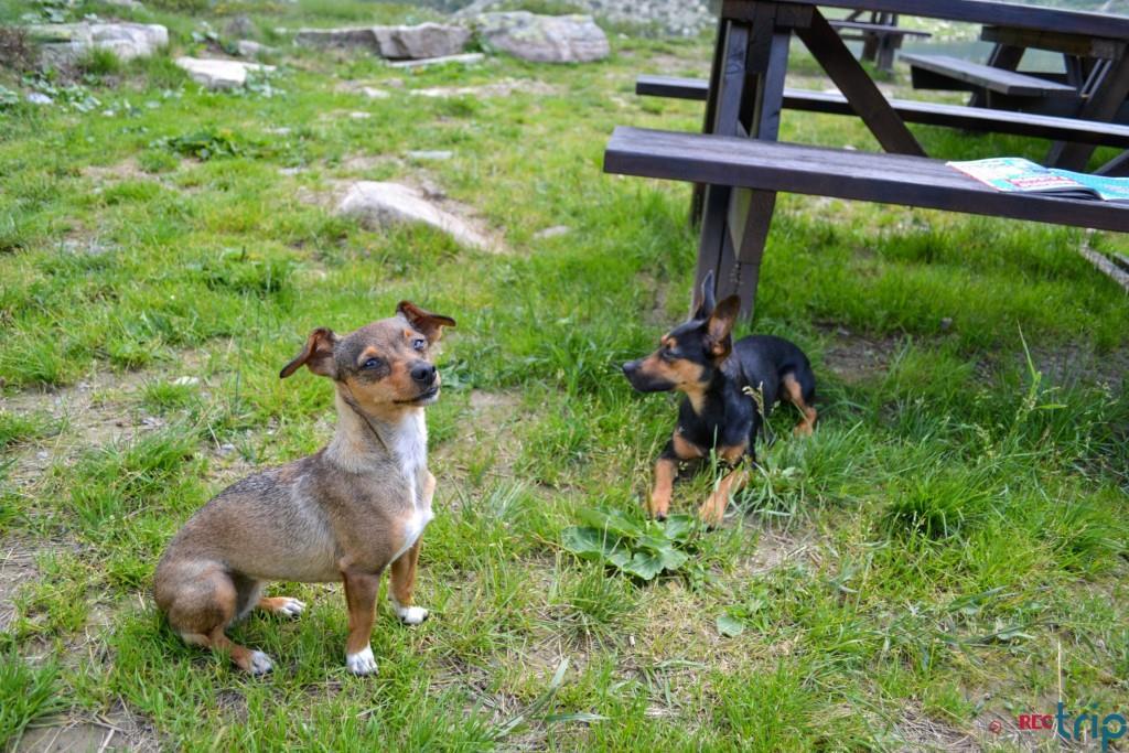 viaggiare con il cane monte maniva brescia