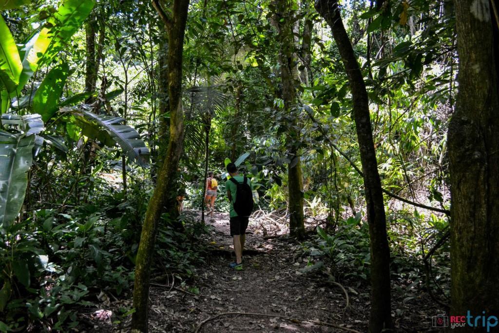 rovine palenque siti maya le rovine del messico