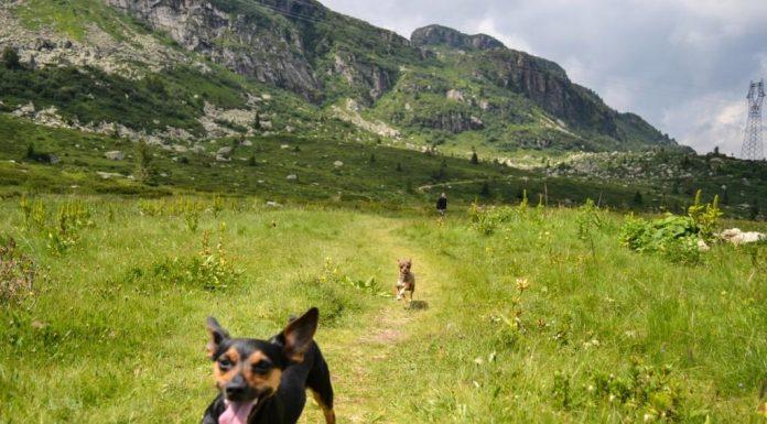 viaggiare e vacanze con il cane monte maniva brescia