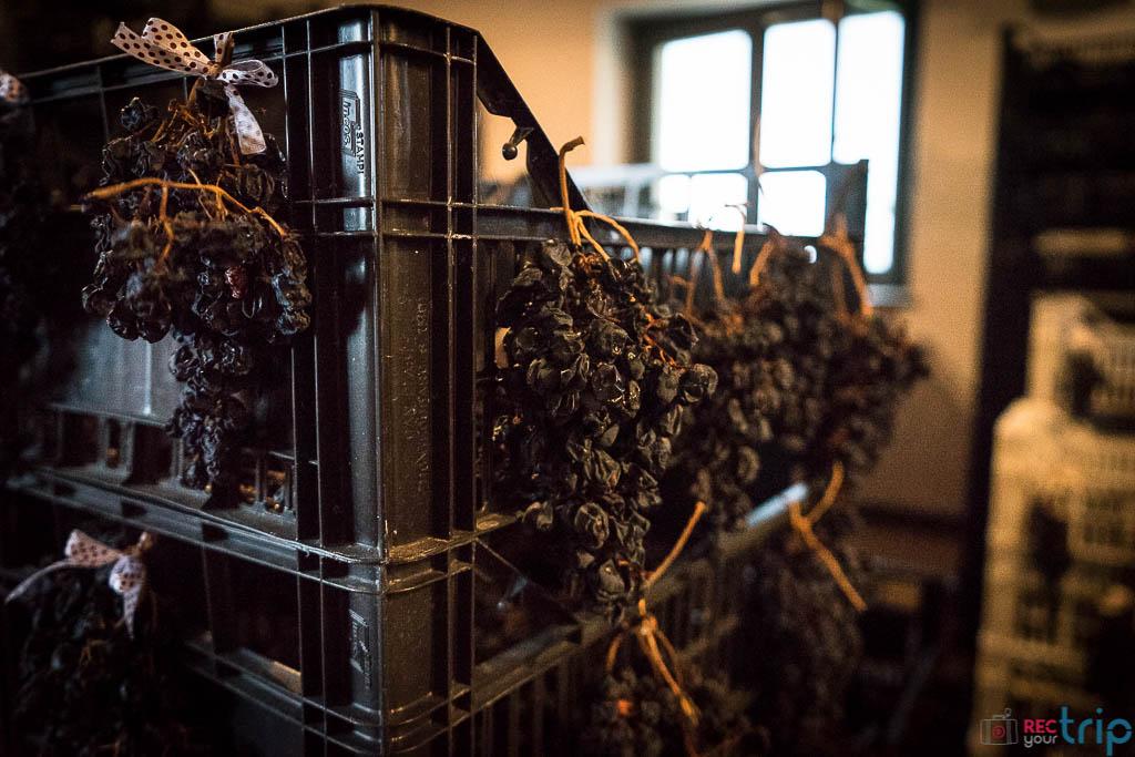 vino vernaccia marche weekend