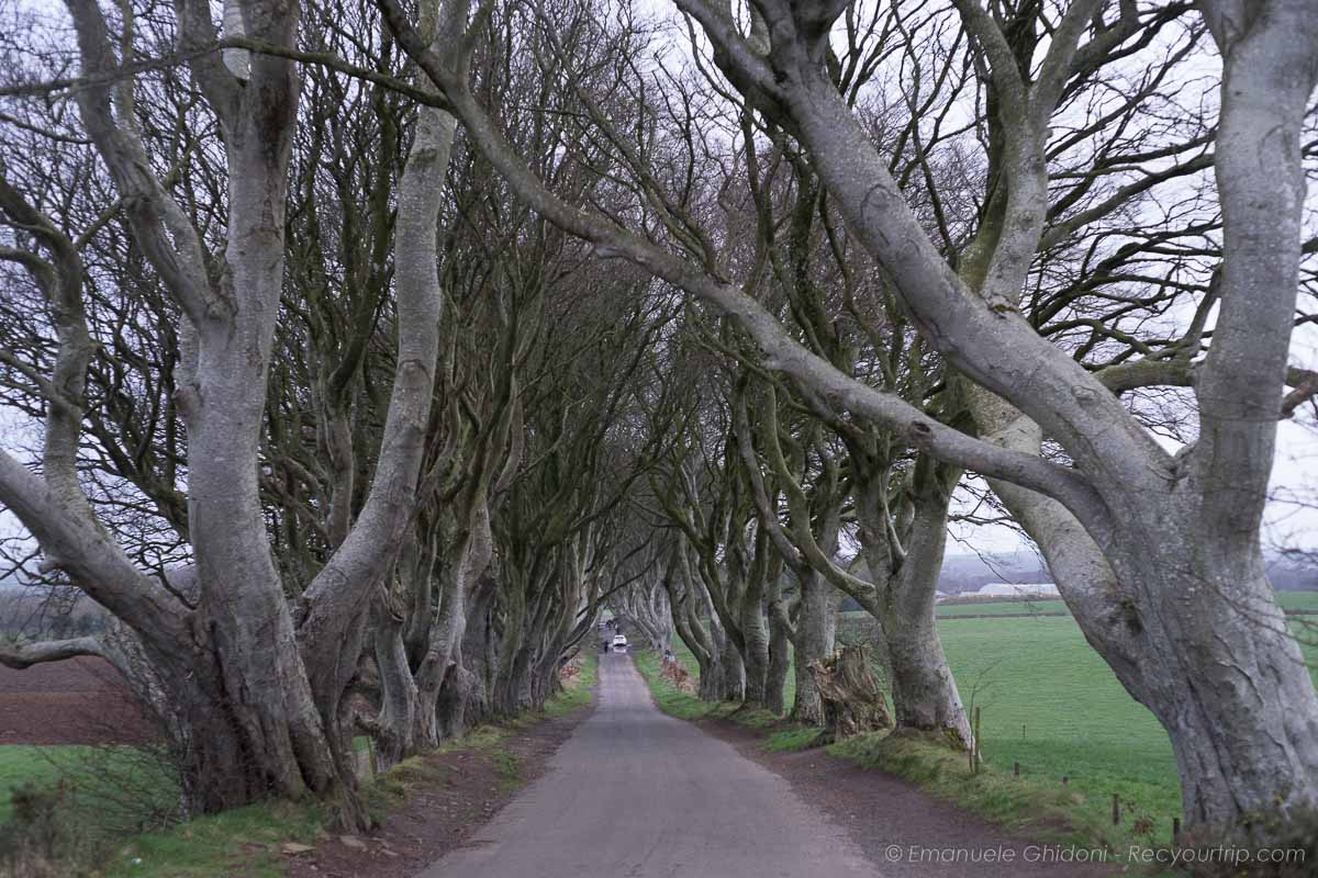 THe Darke Hedges strada nell'itinaraio dell'irlanda del Nord