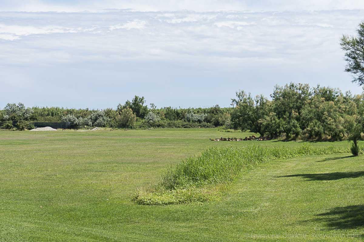 isola di albarella campo da golf