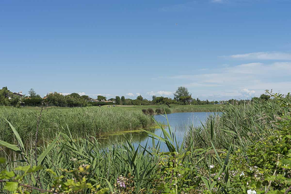 laghetto campo da golf albarella